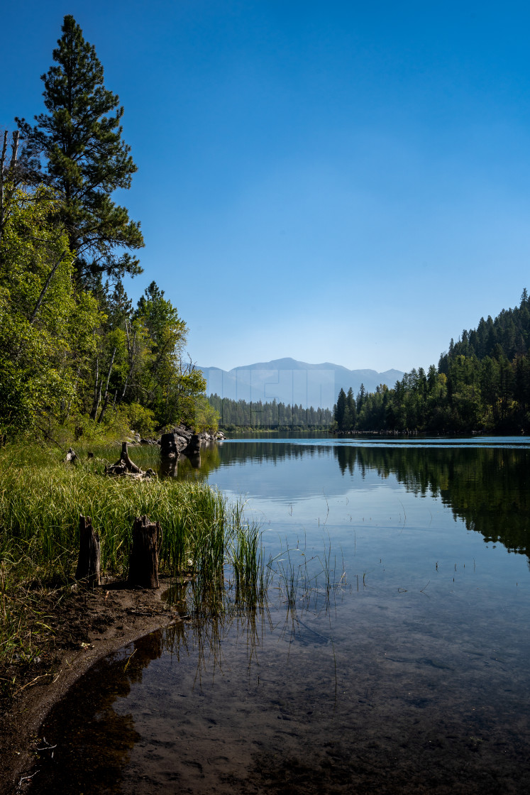 """""""Reflection of Forested Mountains Across a Calm Lake in Montana"""" stock image"""