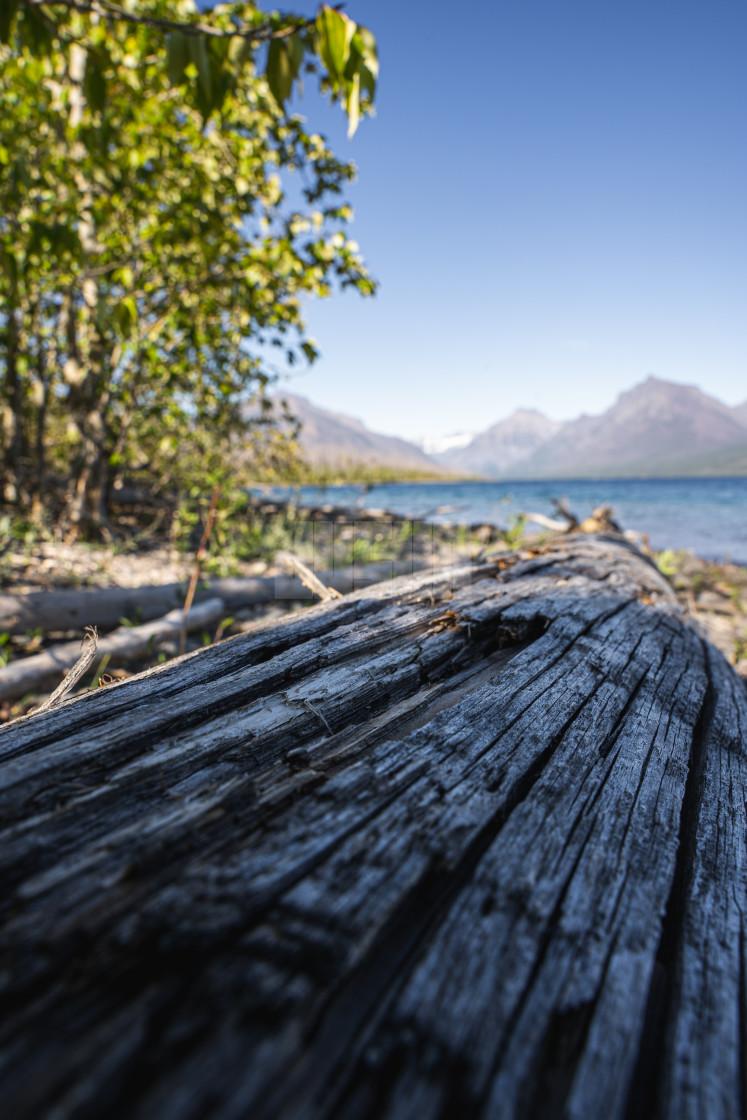 """Fallen Tree Leading into Lake McDonald in Glacier National Park"" stock image"