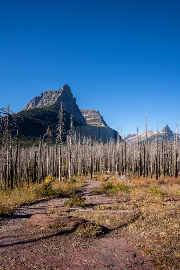 """""""Citadel Mountain and the Burned Forest from the St Mary Waterfal"""" stock image"""