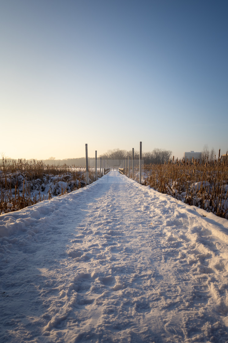 """snow covered boardwalk over frozen wetland at sunset"" stock image"