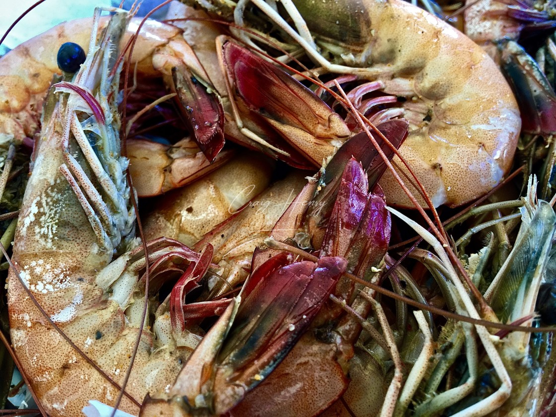 """Seasoned Shrimp"" stock image"