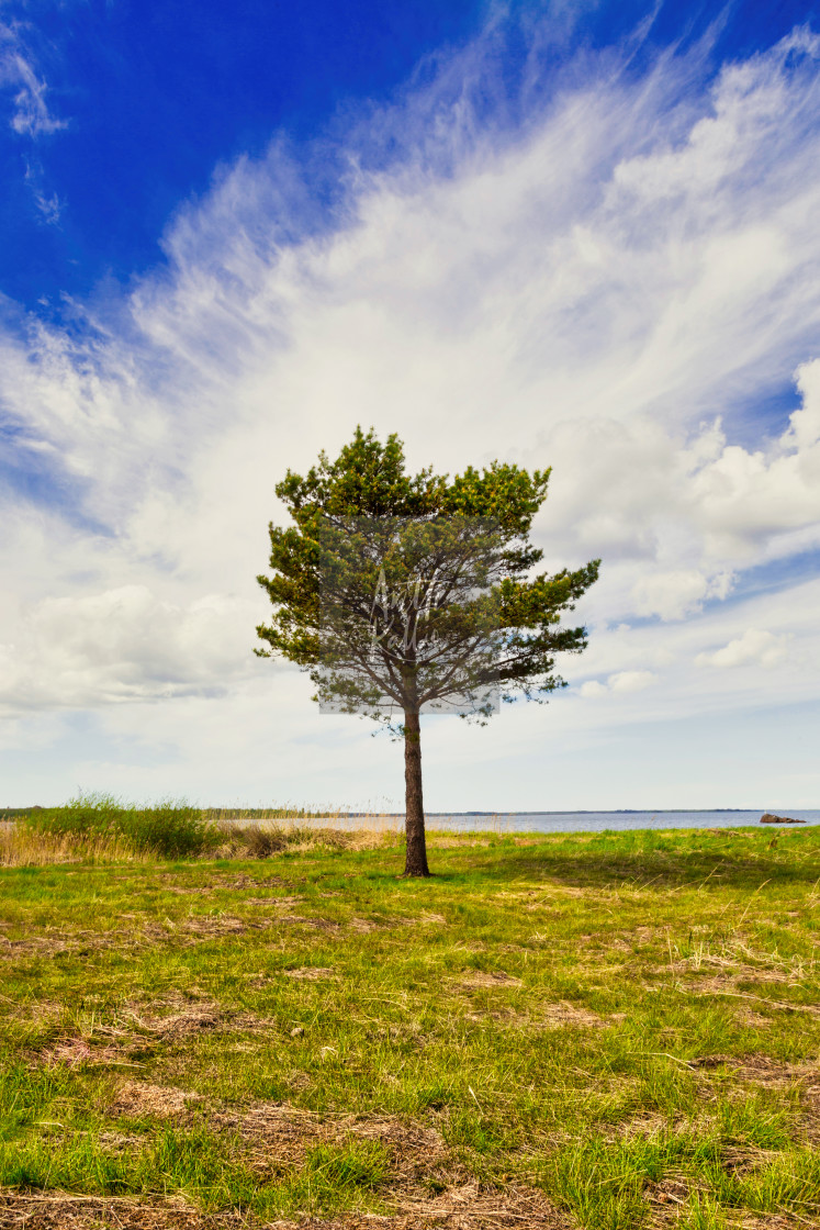 """A lone tree"" stock image"