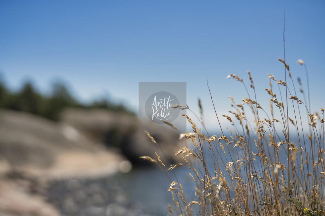 """Hay straws on the coast line"" stock image"