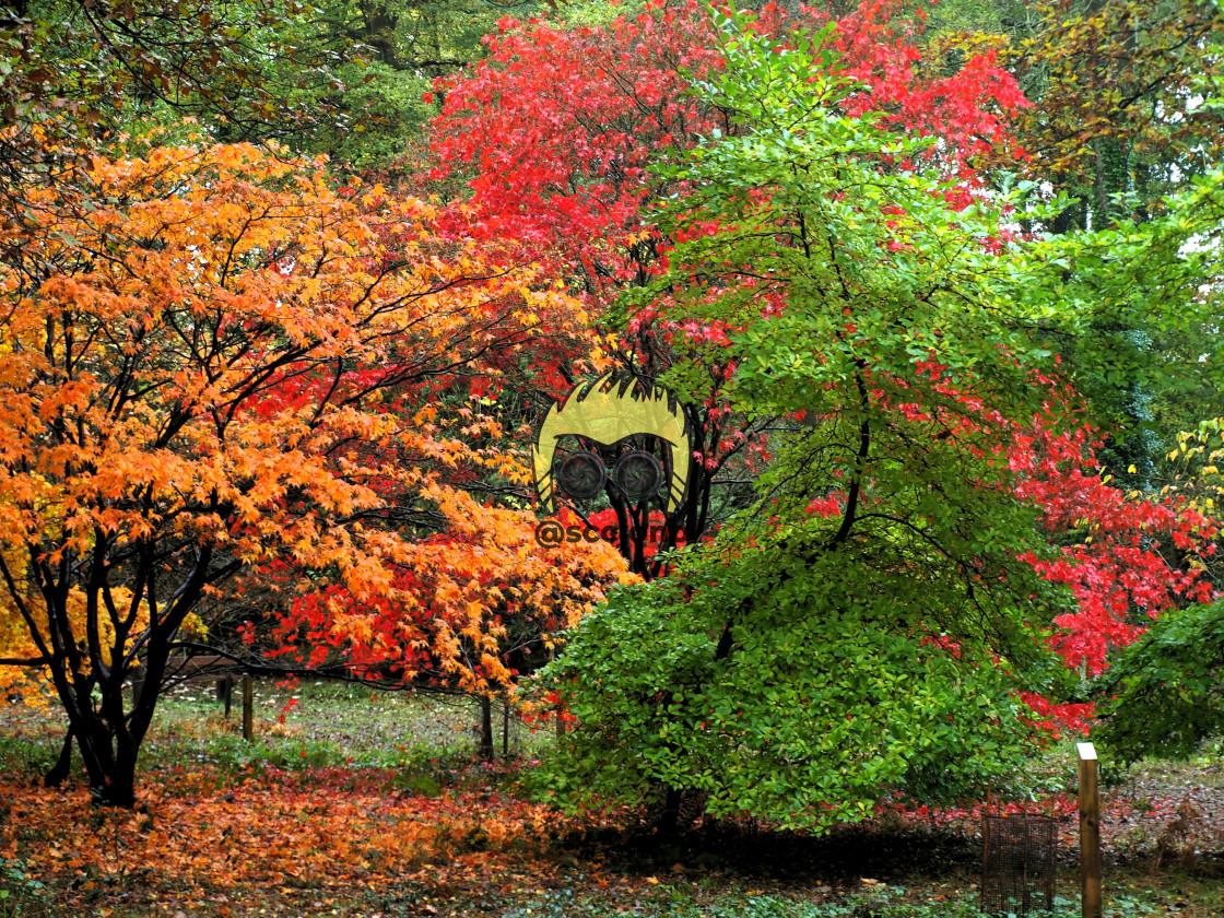 """Autumn Flavours"" stock image"
