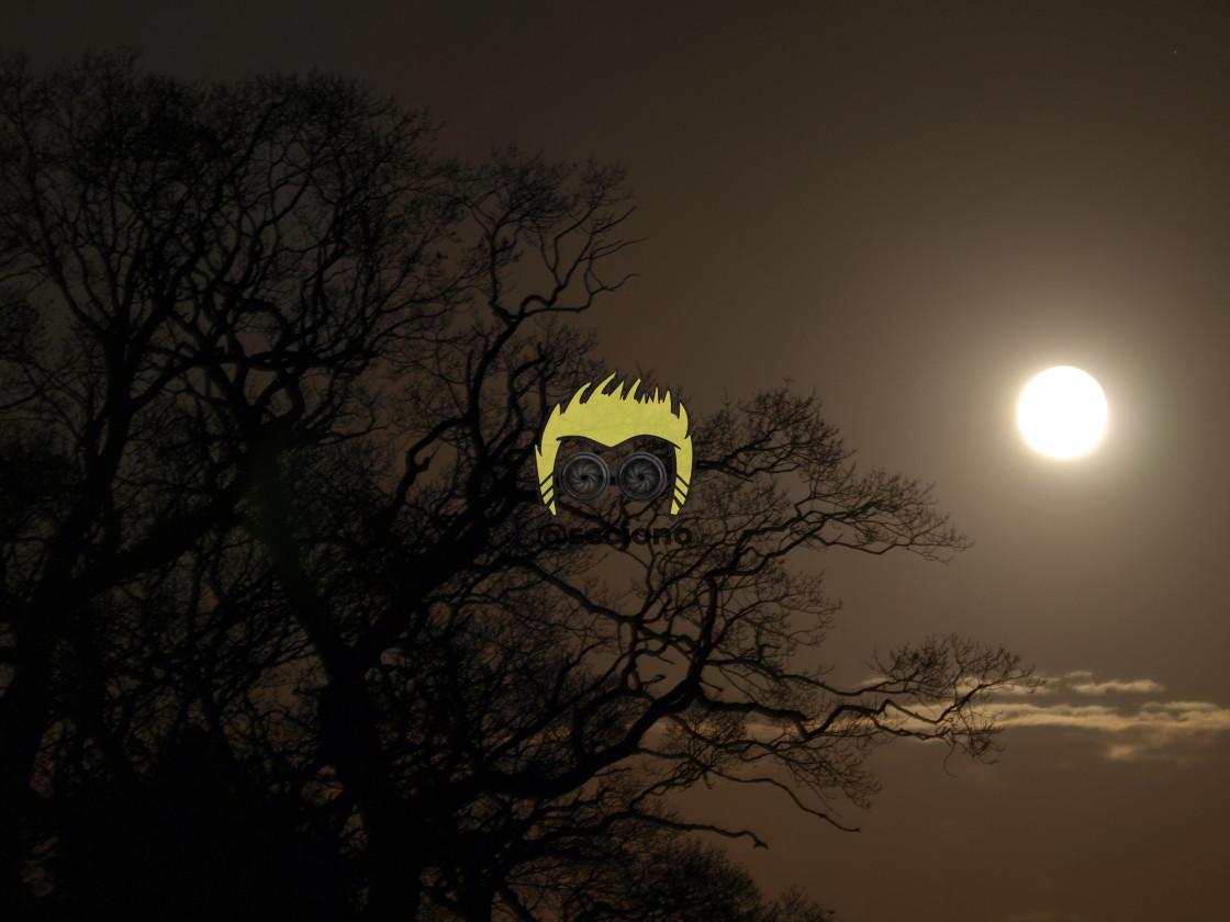 """Winter Moon"" stock image"
