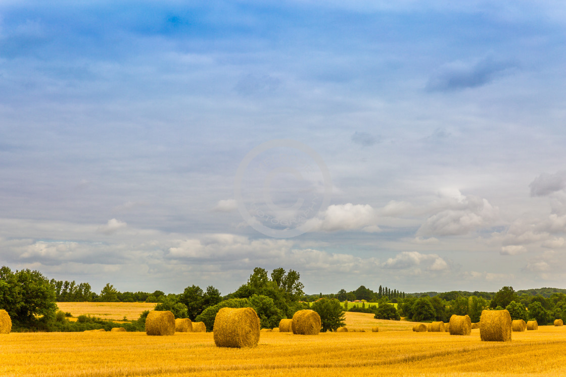 """Golden Harvest in Lege France"" stock image"