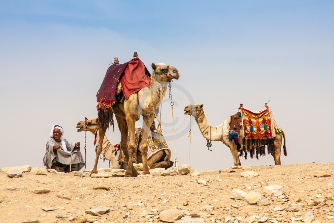 """Camels stop in Desert with people in Egypt"" stock image"