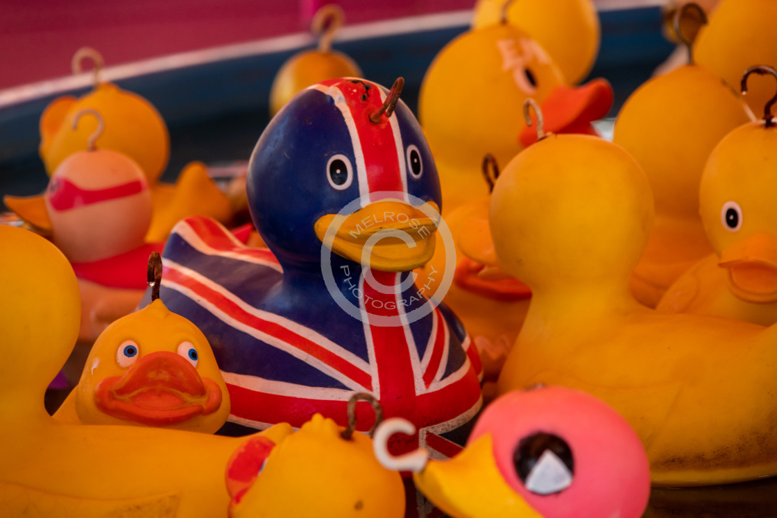 """Brexit UK sitting ducks EU"" stock image"