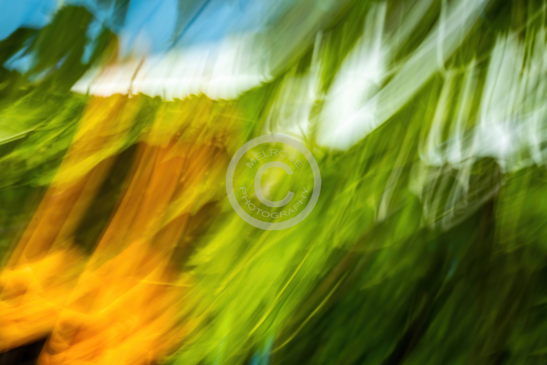 """""""Foliage Abstract Green Yellow Blue and White"""" stock image"""
