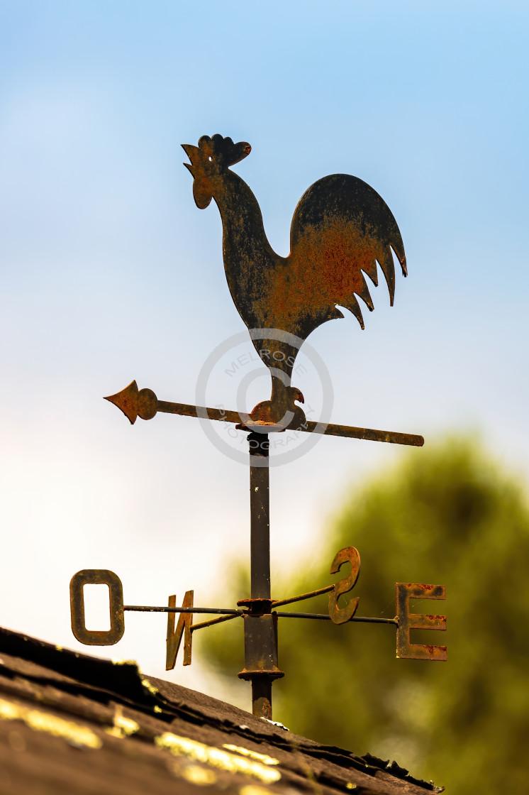 """Cockerel Wind direction"" stock image"
