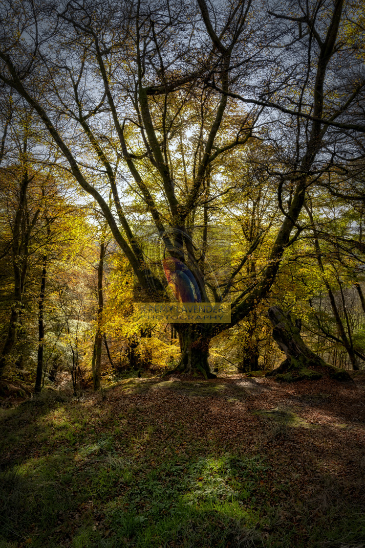 """Callander Forest"" stock image"