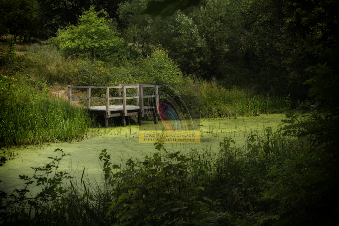 """""""The pond"""" stock image"""