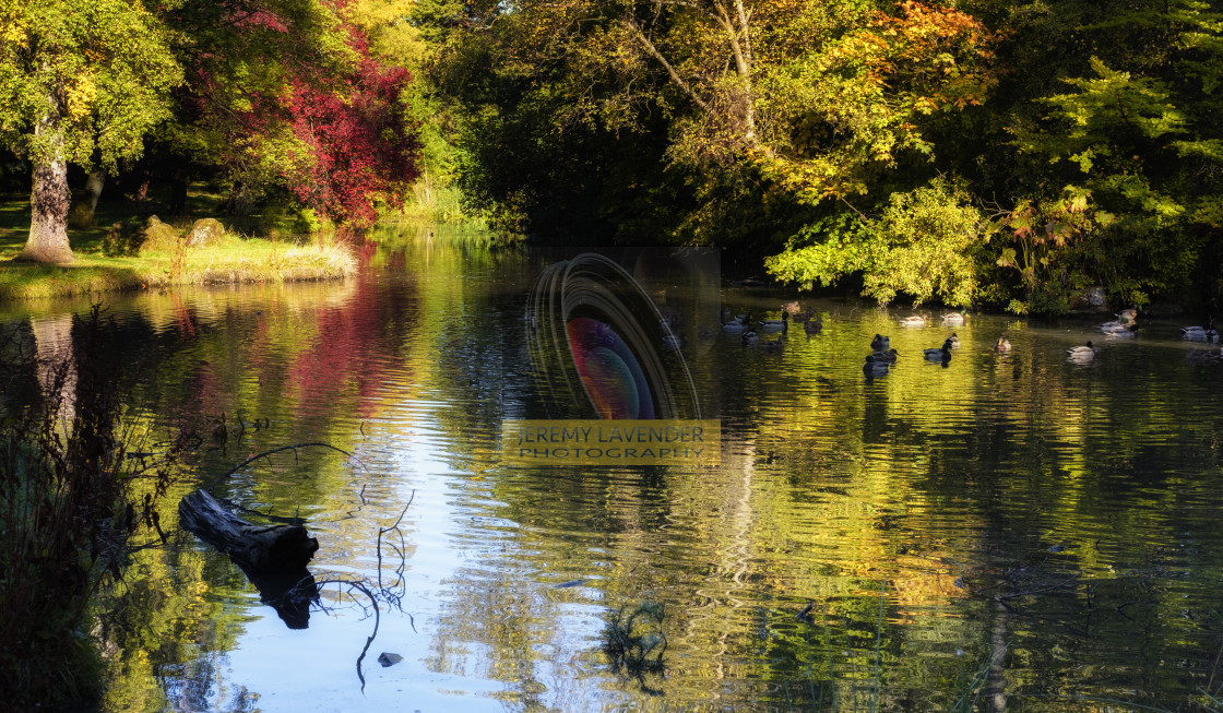 """The pond at Inglewood House"" stock image"