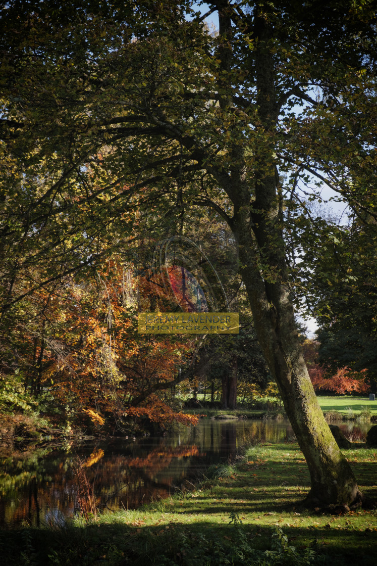 """Beautiful Autumn Colours in Scotland"" stock image"