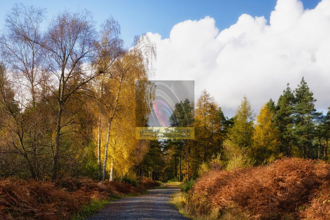"""Autumn walk through Devilla forest"" stock image"