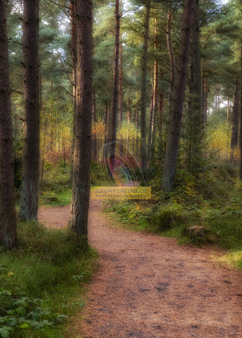 """Following the red squirrels path"" stock image"