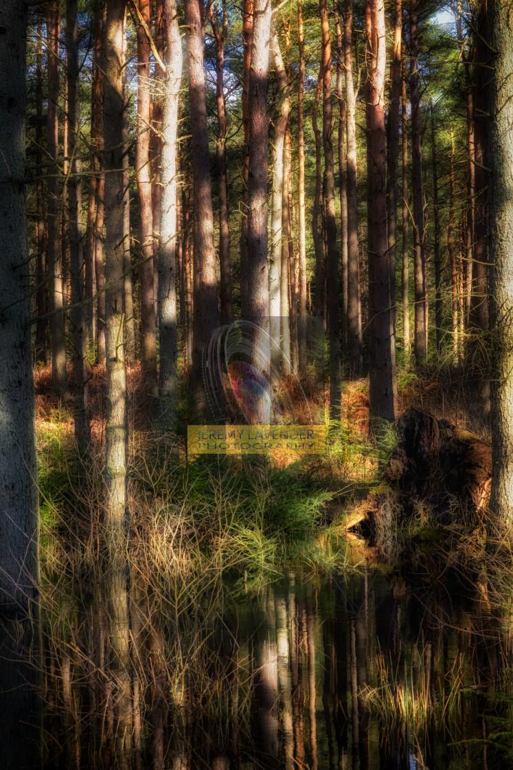 """""""Devilla forest in Kincardine, Scotland"""" stock image"""