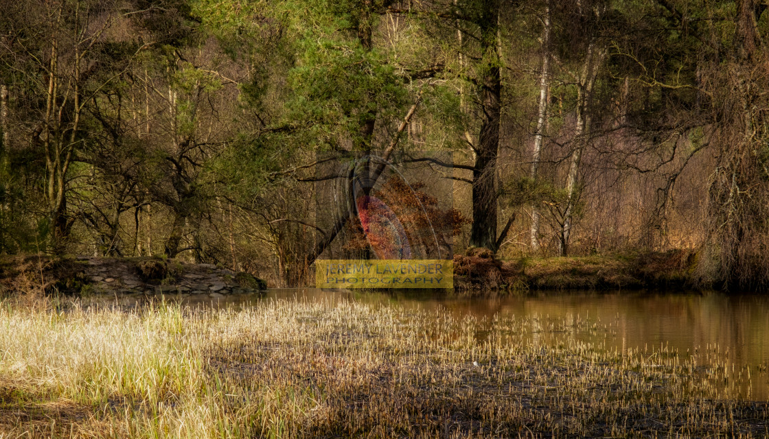 """""""Keir dam in Devilla forest"""" stock image"""