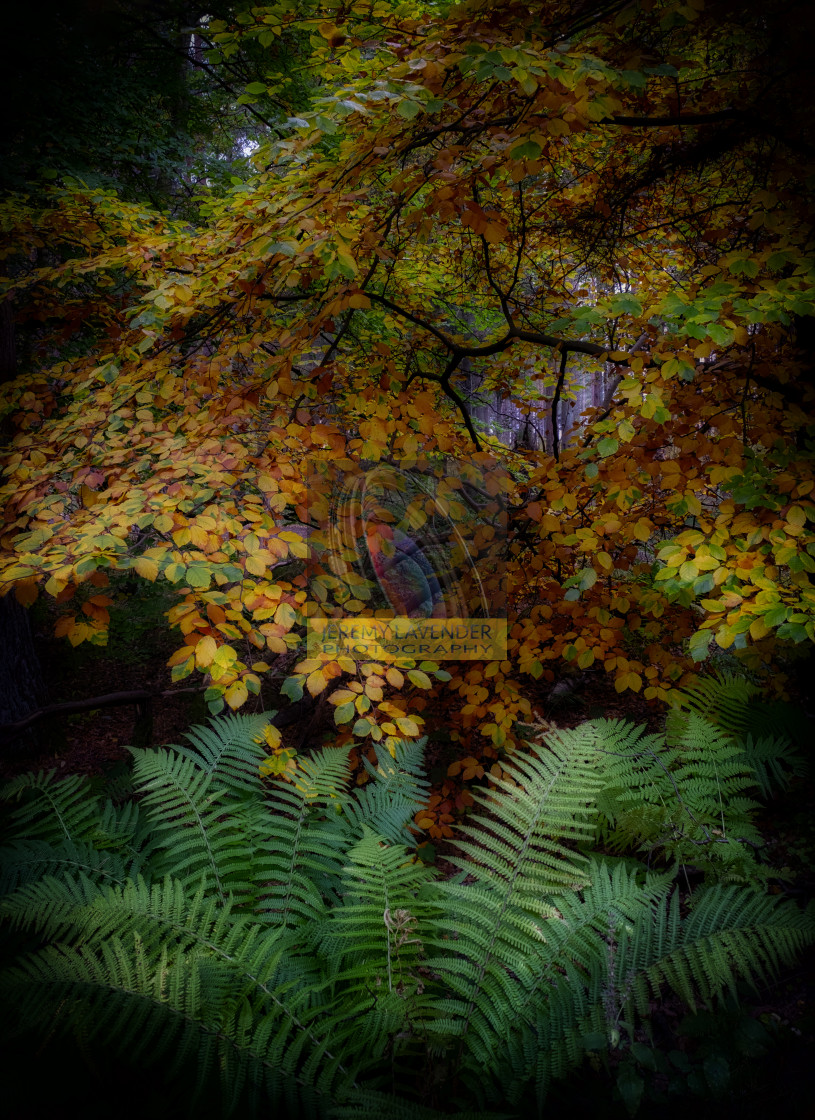 """""""Lovely Autumn colours in Devilla Forest"""" stock image"""