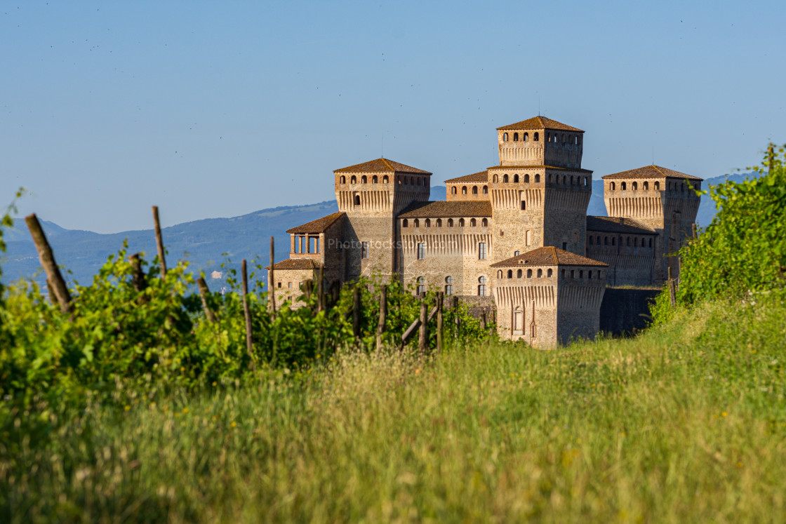"""""""view of a castle from a vineyard on the Italian hills"""" stock image"""