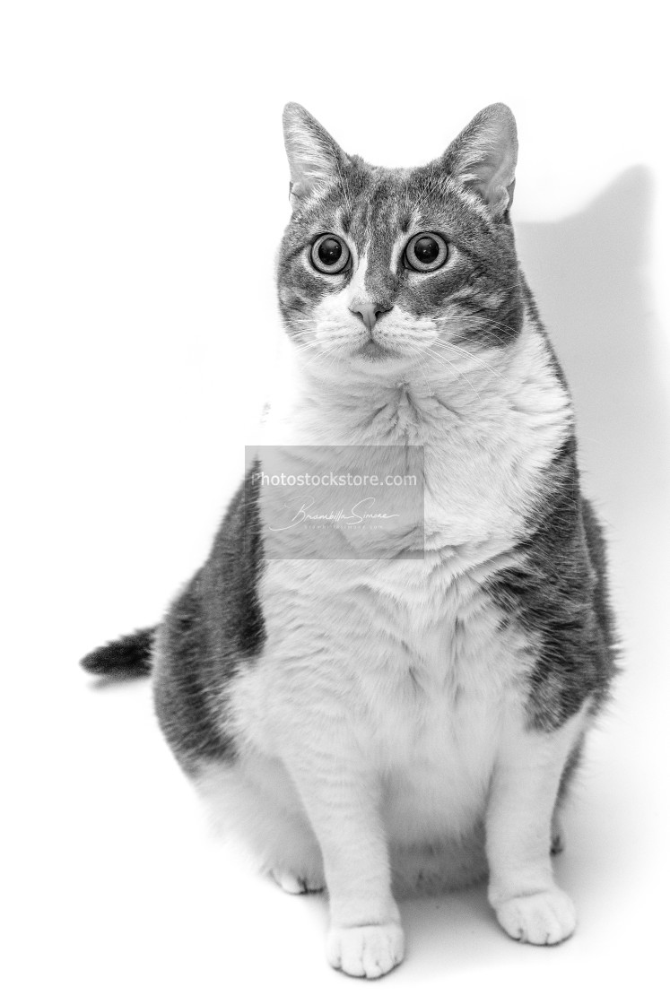 """""""Cat in black and white"""" stock image"""