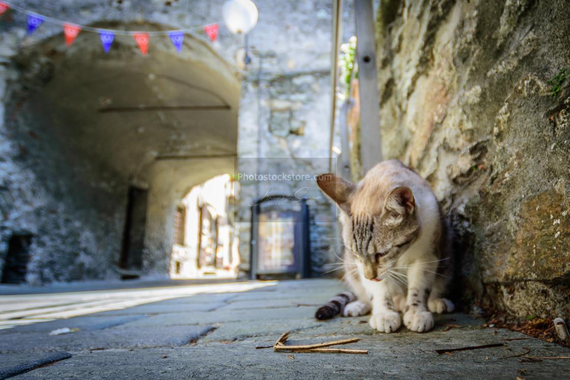 """Cat on the street"" stock image"