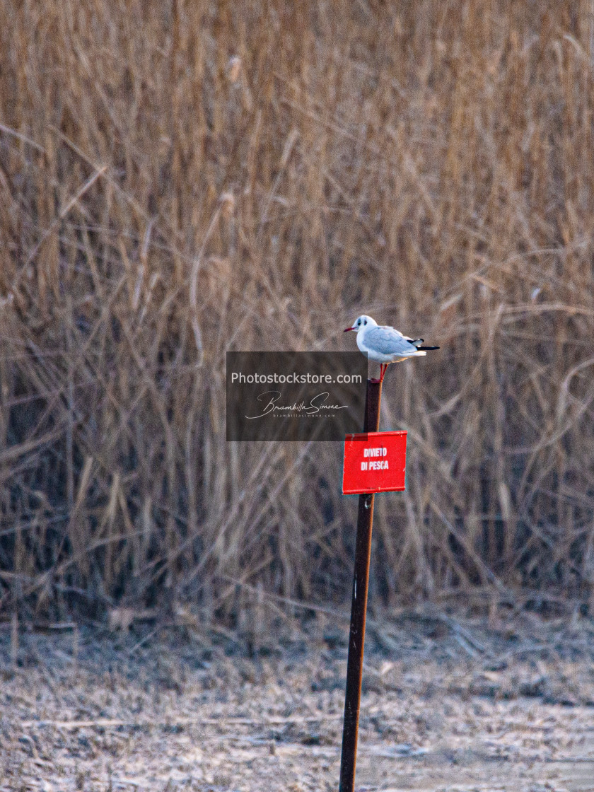 """""""A seagull resting on a """"fishing ban"""" signboard in a swamp in Ita"""" stock image"""