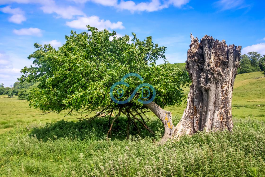 """Weathered Tree"" stock image"