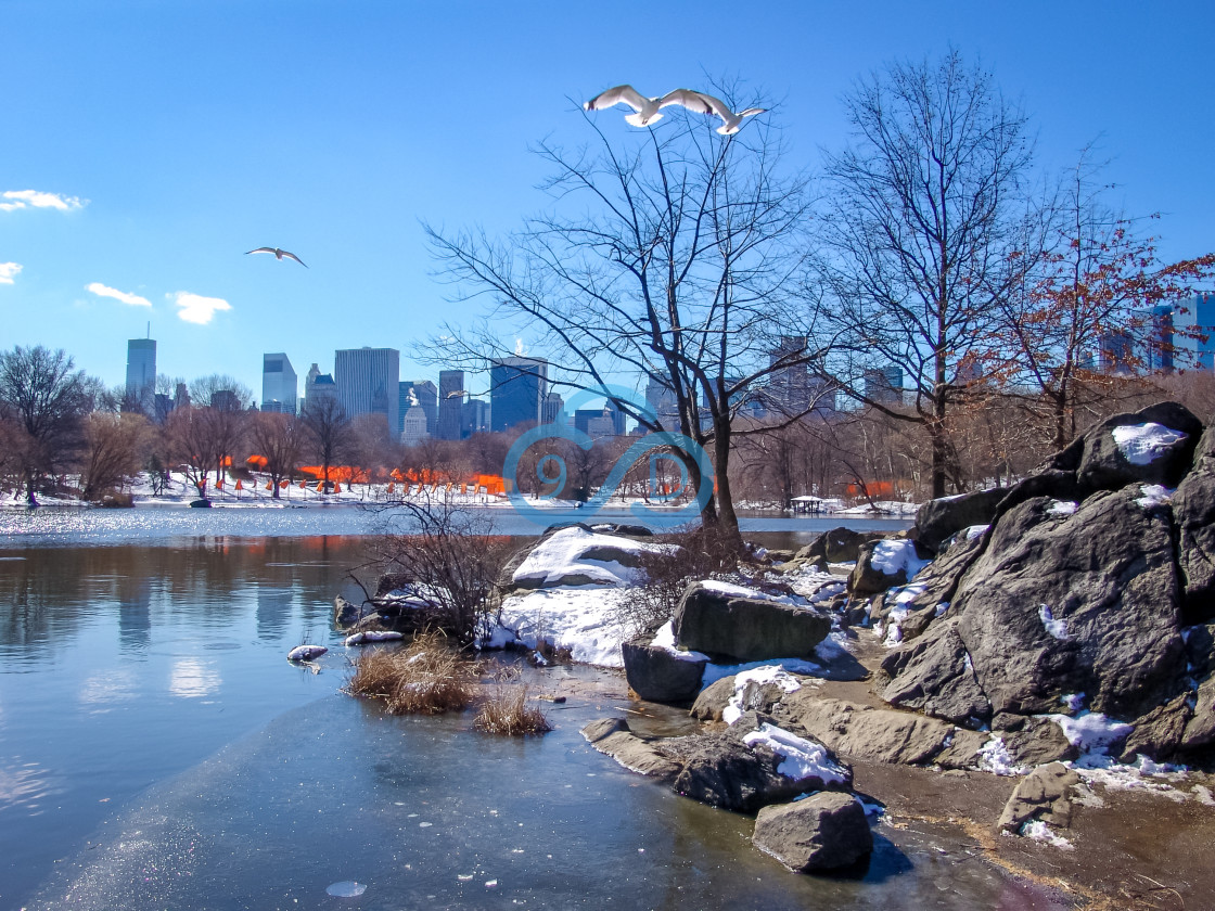 """""""Central Park, New York"""" stock image"""