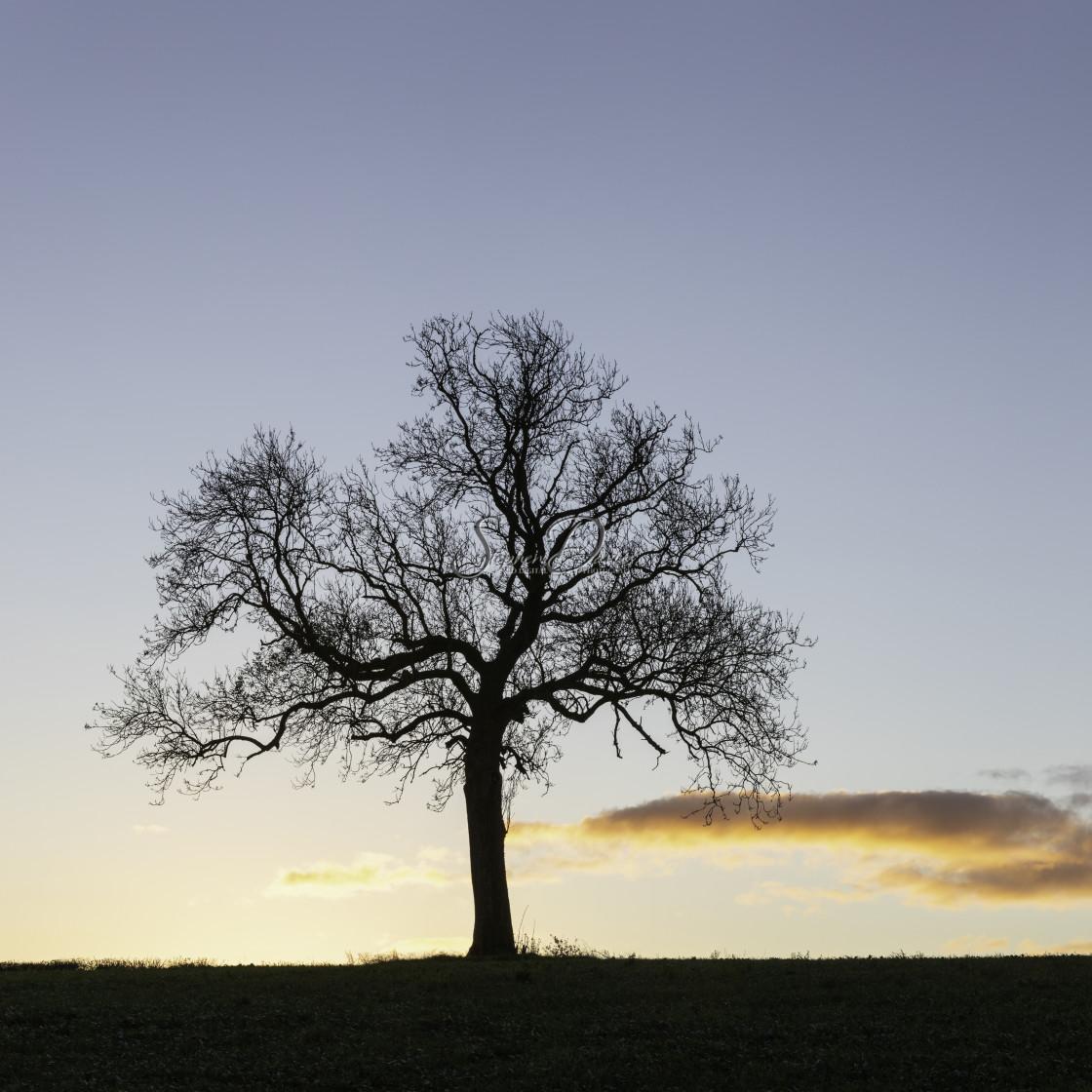 """Lone Tree - 1 of 3"" stock image"