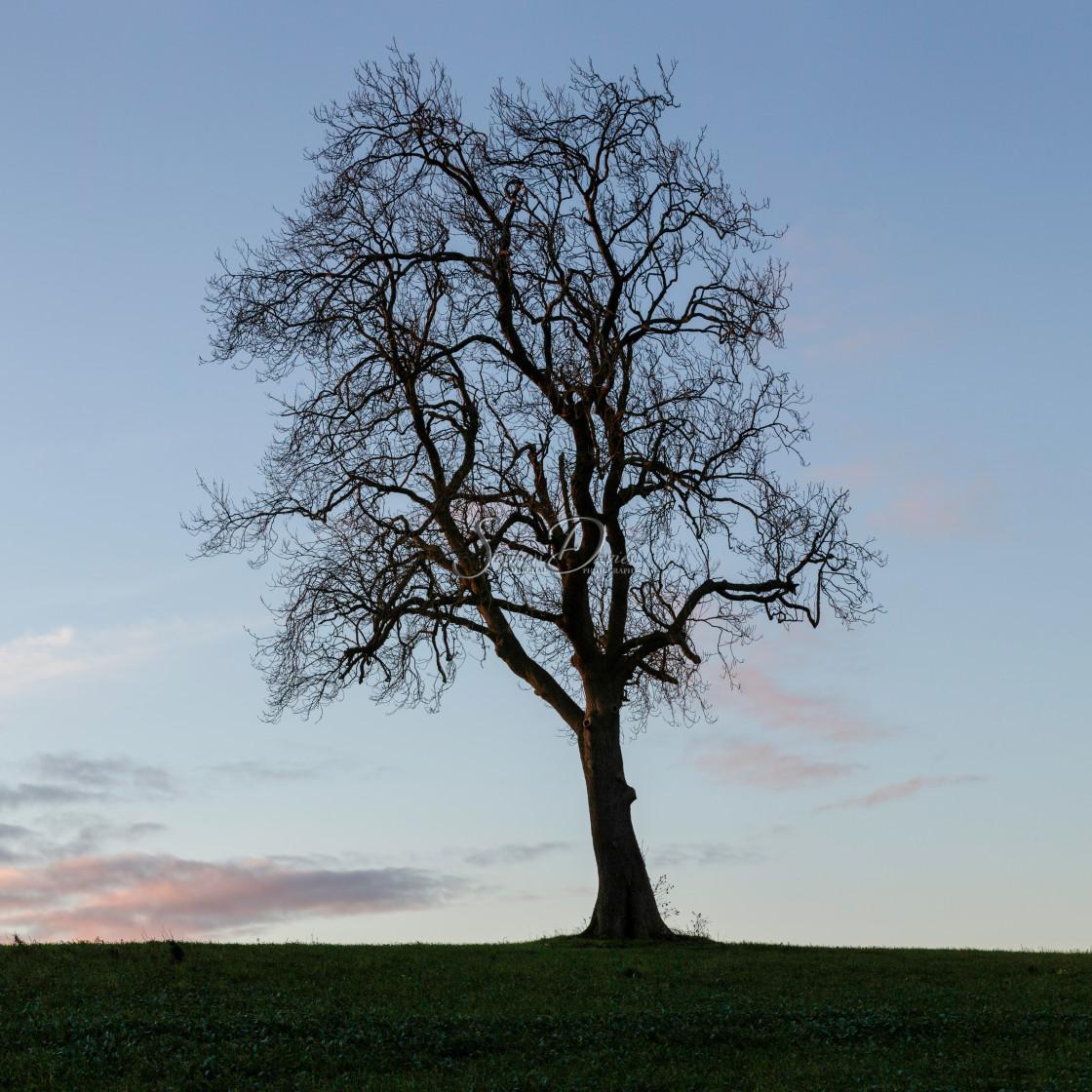 """Lone Tree - 3 of 3"" stock image"
