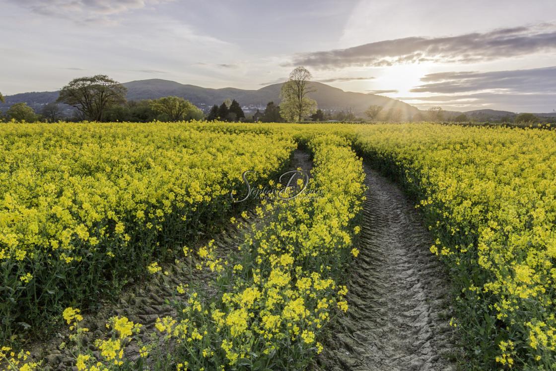 """Malvern Hills sunset"" stock image"