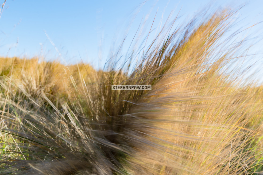 """Blowing a gale // Christchurch, New Zealand"" stock image"