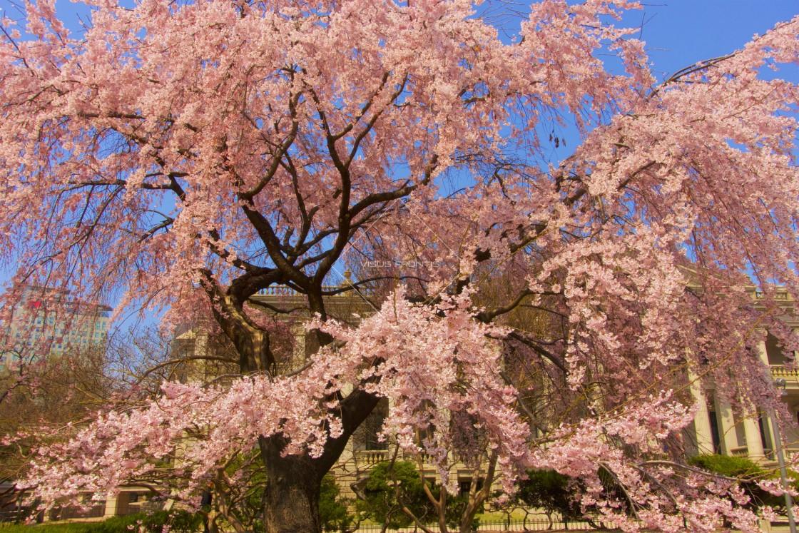 """Spring Galore"" stock image"