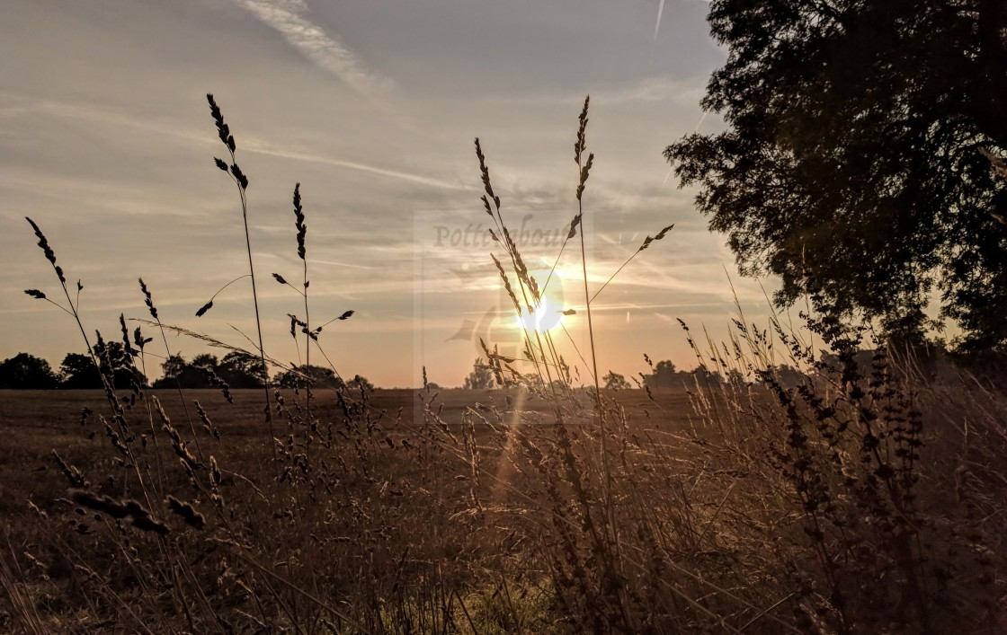 """""""Meadow Sunset against the dry grass"""" stock image"""