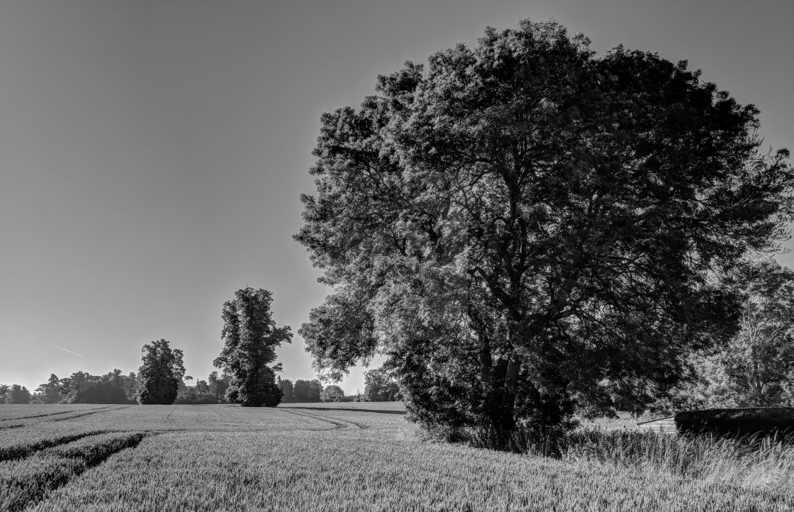 """""""Y Goeden - The Tree black and white"""" stock image"""
