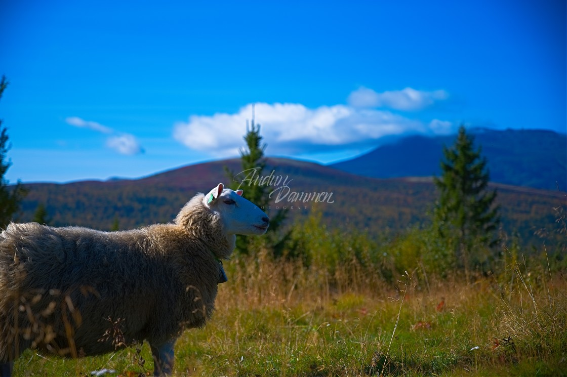 """""""Sheep in front of beautiful landscape"""" stock image"""