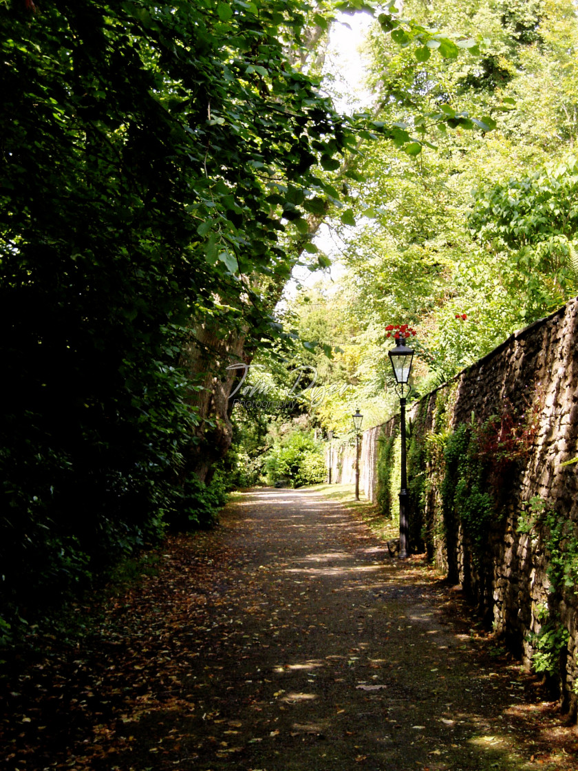 """English Country Lane, Dyrham Park"" stock image"