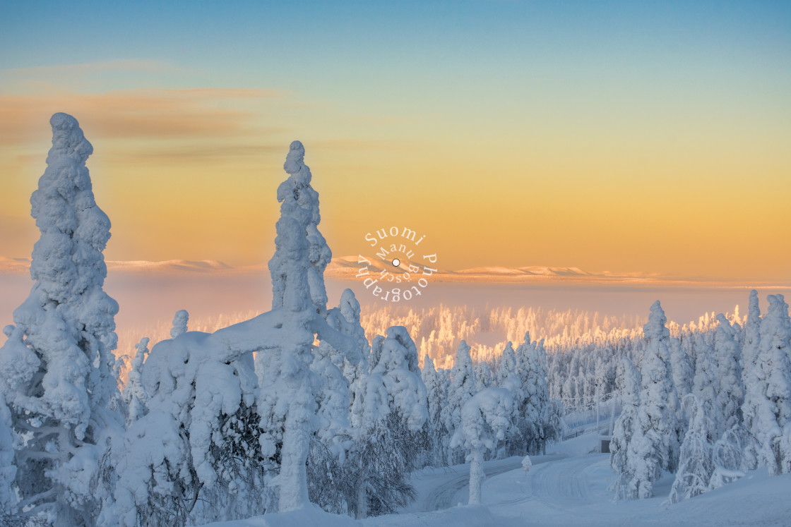 """Winter Wonderland - Frozen Tree"" stock image"