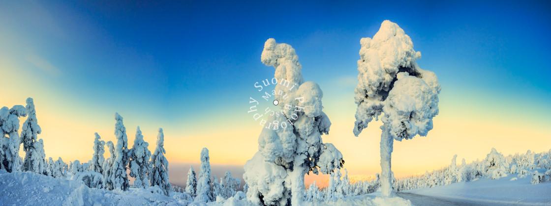 """""""Ice Tree Panorama"""" stock image"""