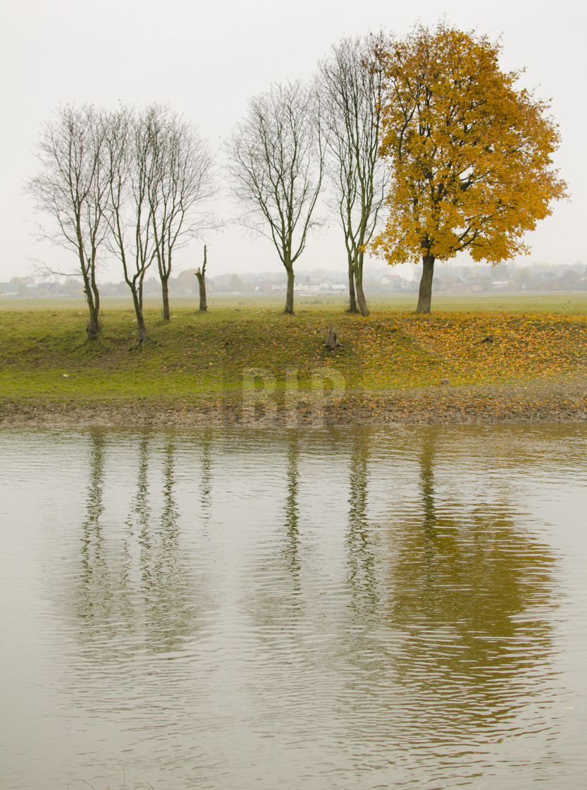 """Tree Study in Autumn"" stock image"