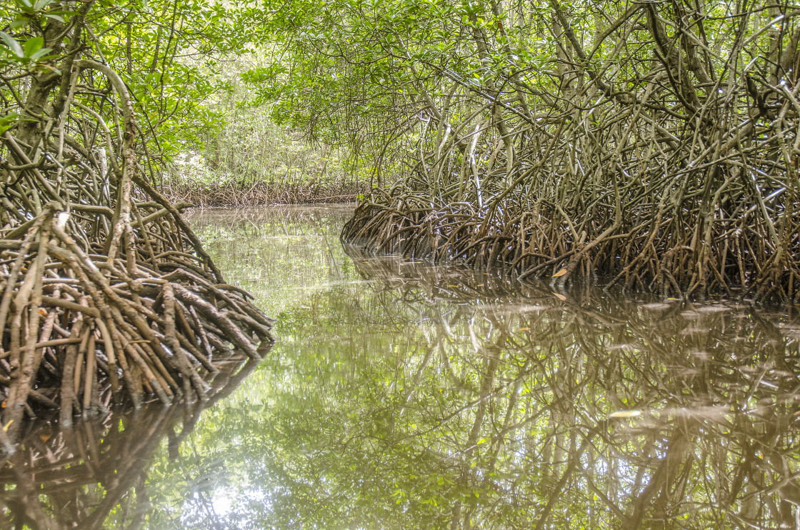 """Mangroves, Nusa Lembongan, Indonesia"" stock image"
