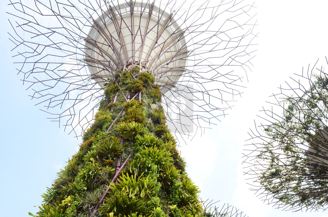 """Supertree Grove, Gardens by the Bay, Singapore"" stock image"