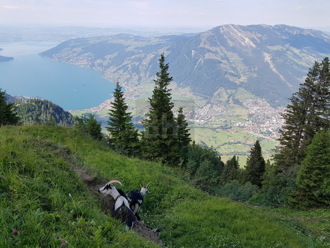 """Swiss Mountain Landscape near Scheidegg (Rigi)"" stock image"