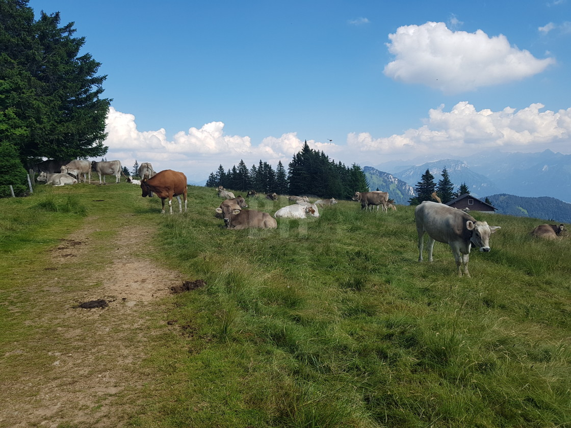 """Upland Swiss Pasture"" stock image"
