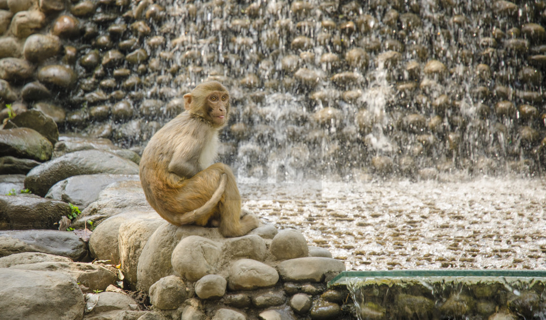 """Monkey at the Monkey Temple, Kathmandu"" stock image"