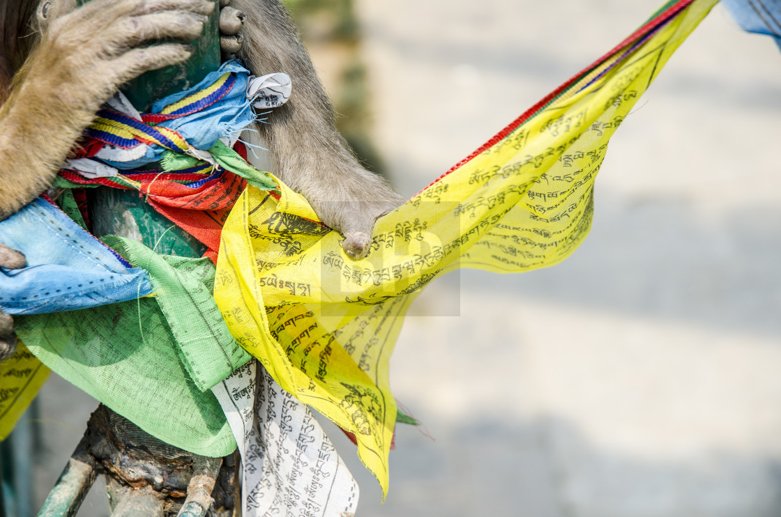 """Prayer Flag"" stock image"