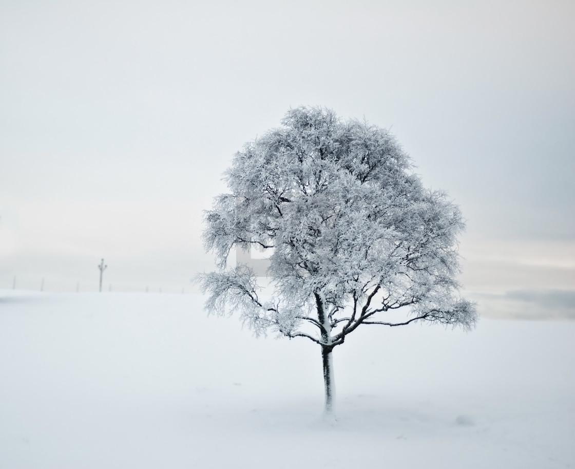 """Tree in Snow"" stock image"