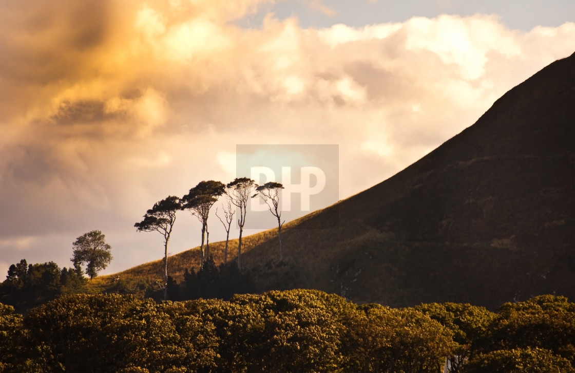 """Trees on Berwick Law, Scotland"" stock image"