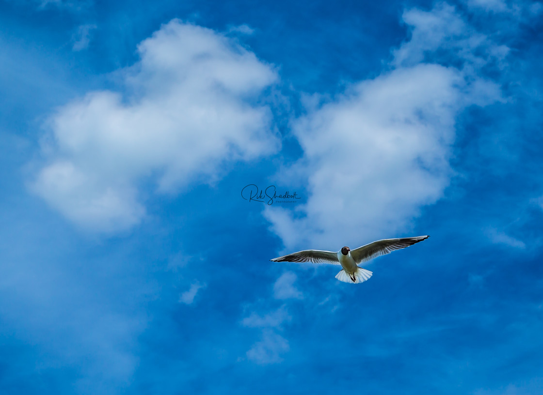 """Flight of the Seagull"" stock image"